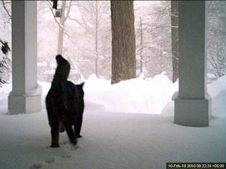black cat walking across porch toward woods