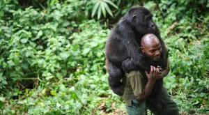 3 Days Gorilla Trekking Congo