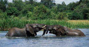 Ziwa Rhino Tracking