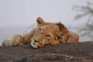 Uganda wildlife Safari to Kidepo National Park