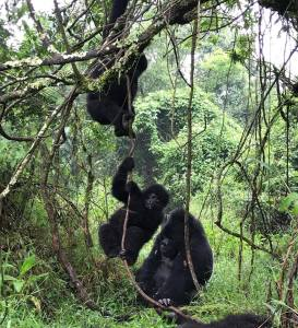 Activities in Bwindi Forest National Park
