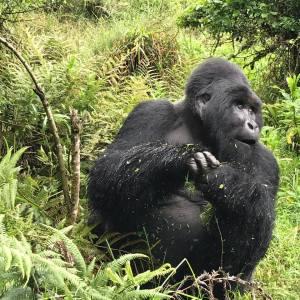 2 Days Gorilla Trekking Uganda