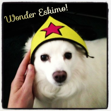 wonder woman, eskimo dog, wonder eskimo