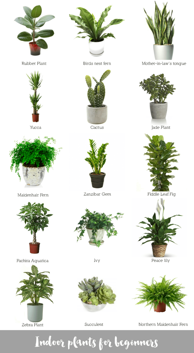 Kinds Indoor Plants