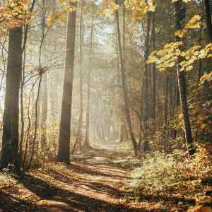 trees and sunshine in forest during autumn
