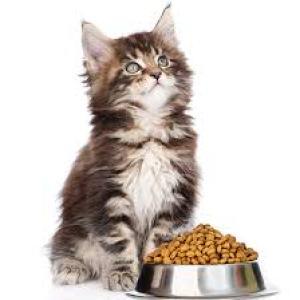 Droogvoer Katten
