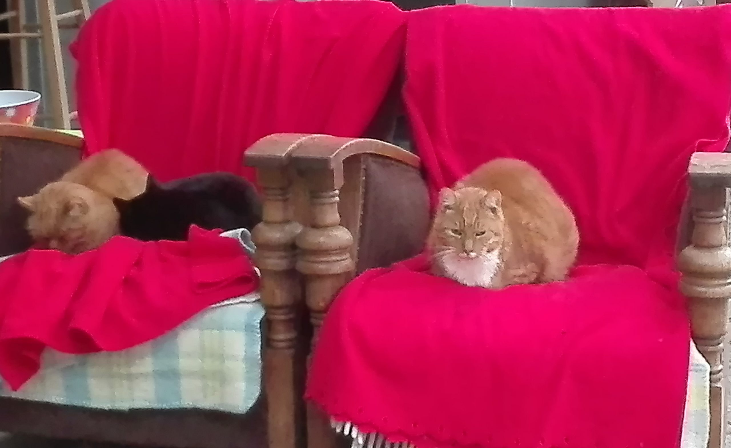 kattenwoudrood