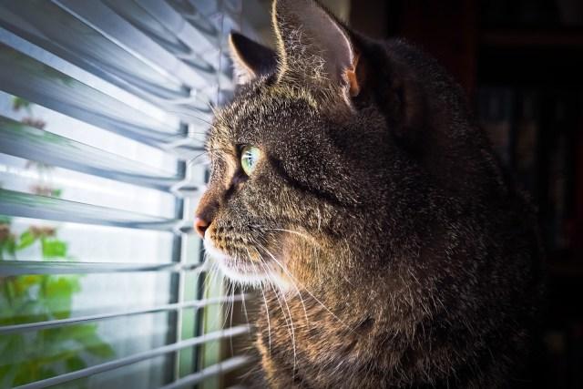 cat-1757919_960_720