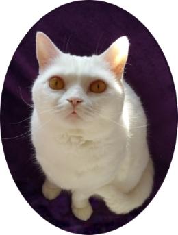 Meine Leistungen der GOLD CAT Katzenbetreuung Hamburg. Zwei verschiedene Betreuungspakete. Individuelles Katzensitting.