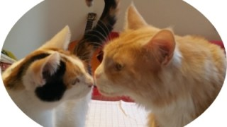 Katzenliebe neue Seite über Ablauf der Katzenbetreuung