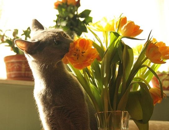 Frhlingsblumen  giftig fr Katzen  Katzenblogde