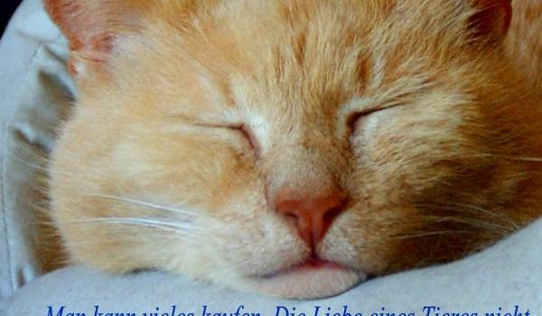 04. Oktober – Welttierschutztag