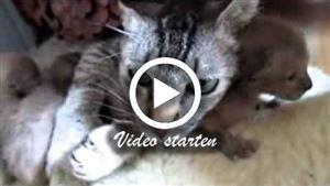 Alle bekannten Katzenrassen mit Beschreibung und Bild