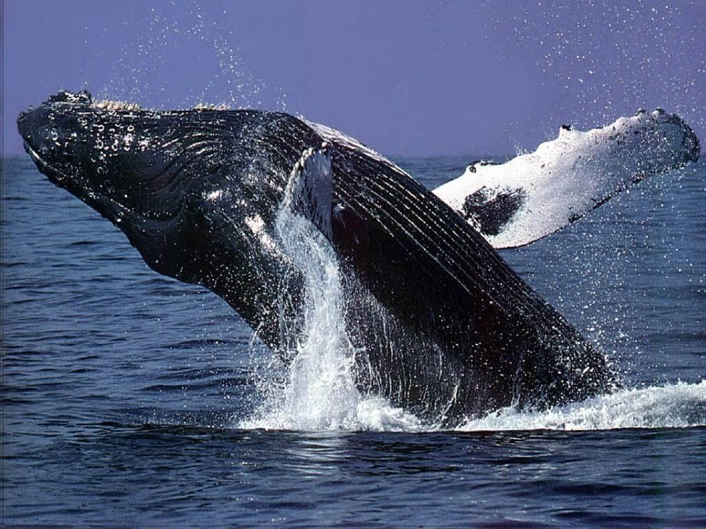 Kauai Whale Watching