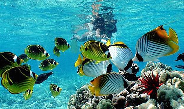 Image result for kauai snorkeling