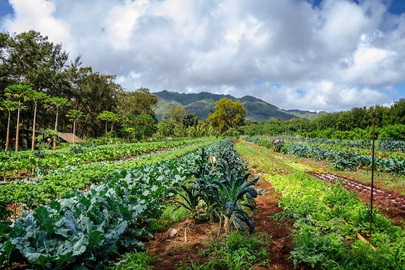 Fresh Market Farm Locations
