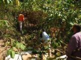 KISC crew removing False Kava on north shore Kauai