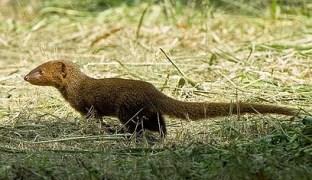 Mongoose WEBIMAGE oldcar 06