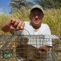 First live capture on Mongoose on Kauai 2012