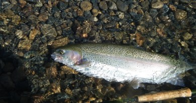 Lower Kings River trout fish report May 1, 2019
