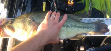 "Nathan Henthorn's 22.25"" Beaver Lake pig."