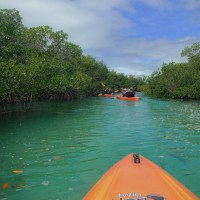 Kayak Tour of Mangroves, Lucayan National Park. - Kayaking