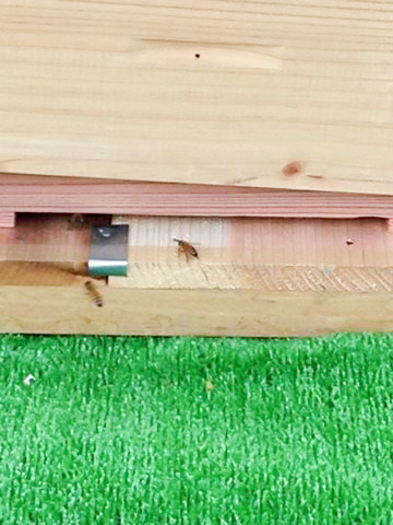養蜂事業 ミツバチプロジェクト 豊川市 - 1