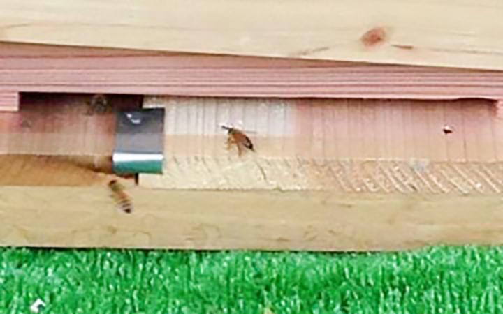 養蜂事業 ミツバチプロジェクト 豊川市 - 3