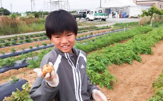 CSR活動 加山ファーム 収穫体験 2017-2