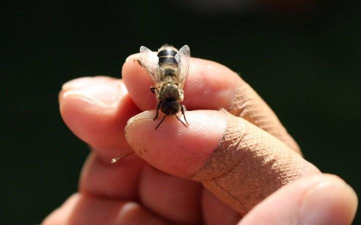 ミツバチプロジェクト はちみつ 採集 CSR活動 環境保全