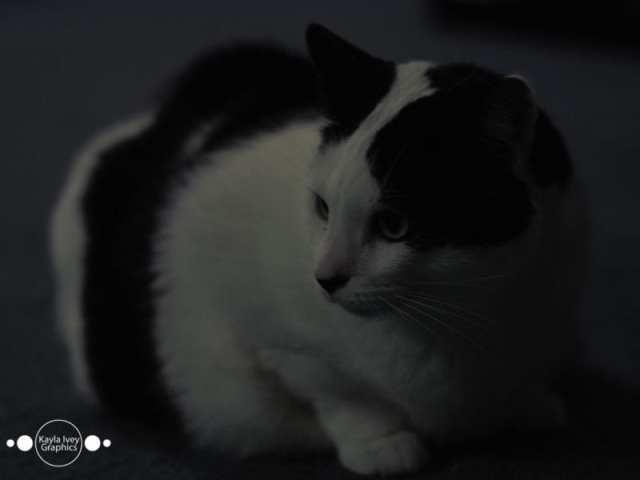 Denny Pet Portraits