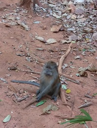 one boring monkey sitting on reddish brown dirt