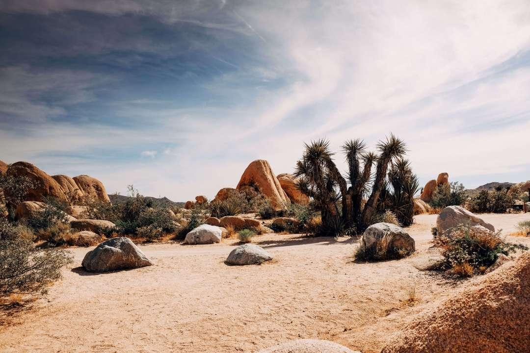 Desert scape rocks
