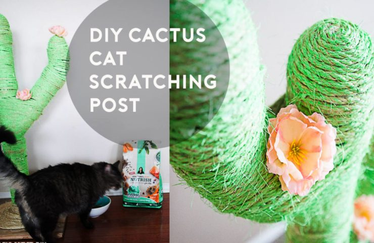 DIY Catcus Scratching Post