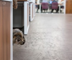 Dog in the office Vets4Pets