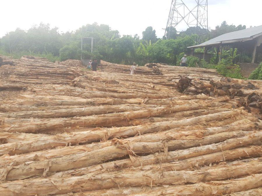 Jual Kayu Dolken Gelam Kota Surabaya | Jual Kayu Dolken Gelam Harga Murah dan Free Ongkir