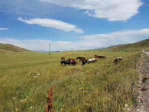 Kazakh steppe