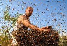 "Photo of ""Čovjek pčela"" želi ući u Guinnessovu knjigu rekorda"