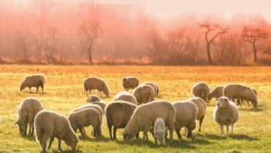 Photo of Za razvoj poljoprivrede