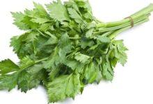 Photo of Celer protiv otečenosti