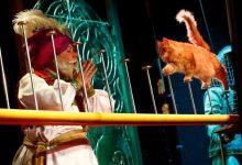 Photo of Pozorište mačaka u Moskvi osvaja publiku već tri decenije
