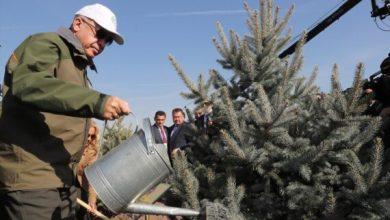 Photo of Erdogan: U Turskoj u posljednjih 17 godina zasađeno četiri i po milijarde sadnica