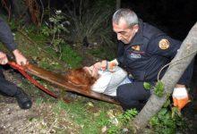 Photo of Žena pala u provaliju, a pomoć prihvatila tek kad joj je pronađen mobitel