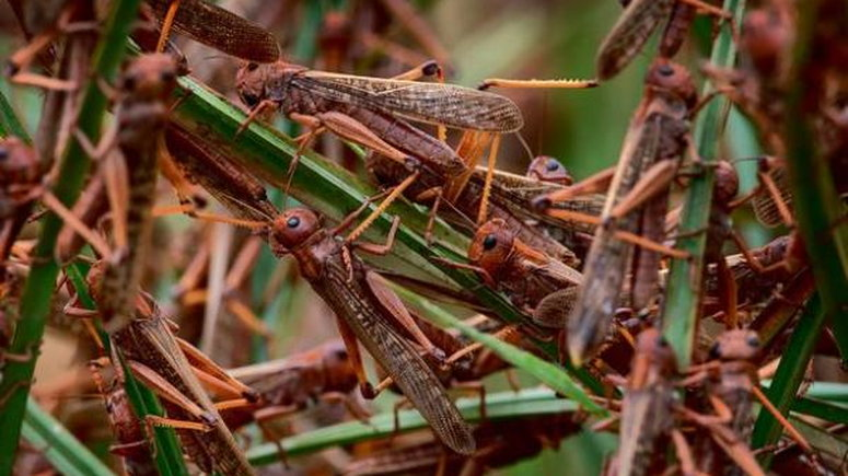 Agricultural officers trained in renewed fight against desert locusts