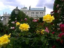 Volksgarten Roses