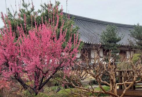 Busan day 4 - Gyochon Traditional Village 17