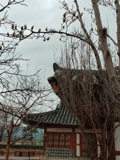 Busan day 4 - Gyochon Traditional Village 6