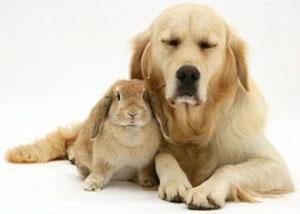 Cuento del perro y el conejo