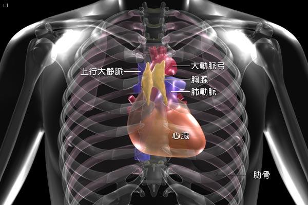 ガン治療 外國人 受け入れ 難病治療法 ラドン溫濕浴 放射線 ...