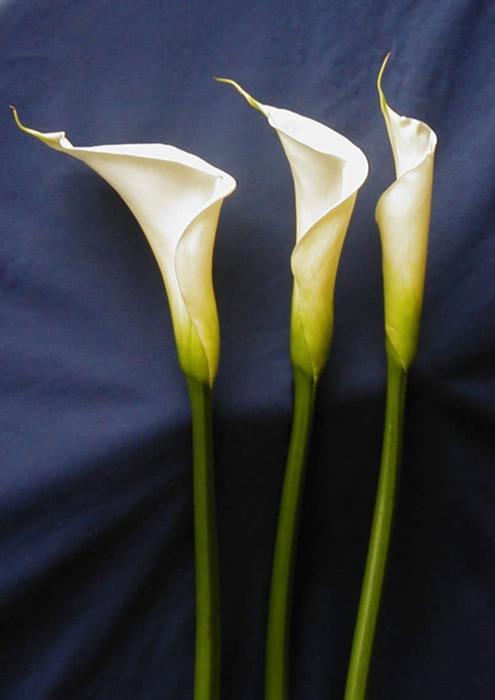 Flores en Madrid servicio de decoracin floral